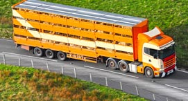 Livestock-Transport_271x146_opt50